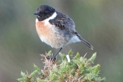 Ian Hart: Stone Chat male