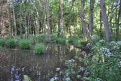 Beaver habitat: By Glyn Davies