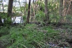 Beaver's habitat on the Holnicote Estate: By Glyn Davies