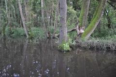 Beaver's habitat by Glyn Davies
