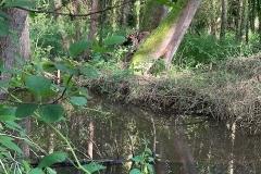 Beaver enclosure on the Holnicote Estate:  C Tickner