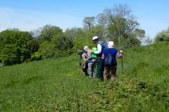 Top of Maple Ridge Field: Summer 2021 Plant Survey: Martina Slater
