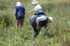 Lower Maple Ridge Field: Summer 2021 Plant Survey: Martina Slater