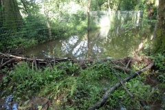 Beaver's dam and fencing: Martina Slater