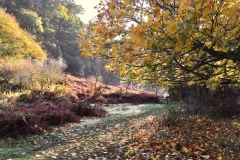 Deer Park, Dunster: John Rivoire