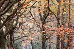Dunster Woods: Ian Hart