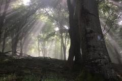 C.Tickner: Little Haddon Woods, Selworthy