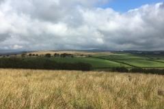 C.Tickner: Exmoor, above Whithypool