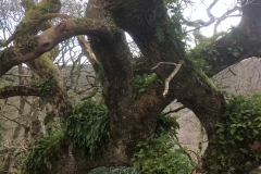C.Tickner: Woods at Webbers Post