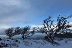Windswept trees on Porlock Hill: Martina Slater
