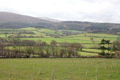 Tree planting Holnicote Estate: Ian Hart