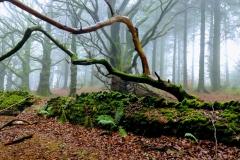 Winter in  Willet woods: Vanessa Wolfman