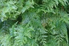 Ferns, Mosses and Lichen