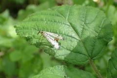 Scorpian Fly: Martina Slater