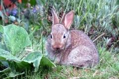 Martina Slater: Rabbit