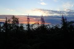 Rosebay willowherb at Hurlstone Point: Martina Slater