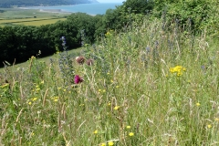 Flower Filled meadow at Bossington: M Slater